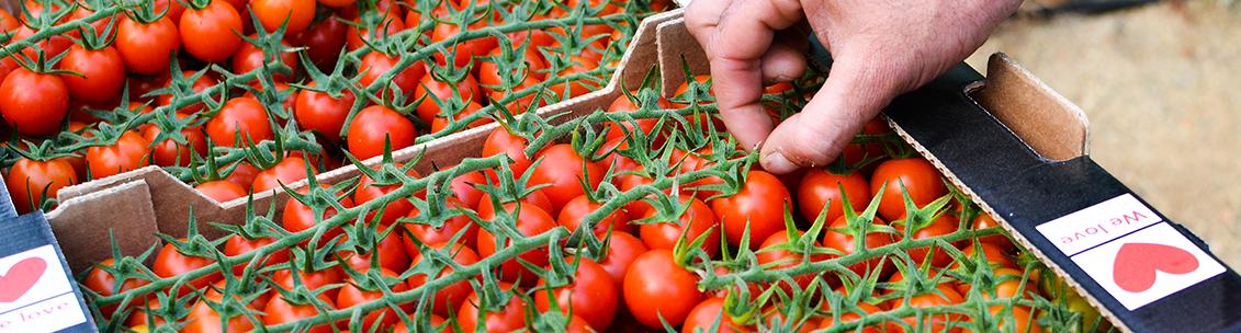 Tomates Cherry Naturinda
