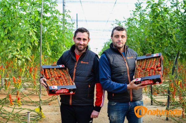 Productores de tomate cherry Almería Almeria