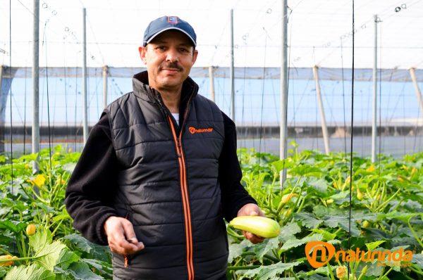 Agricultor de Almería calabacín blanco